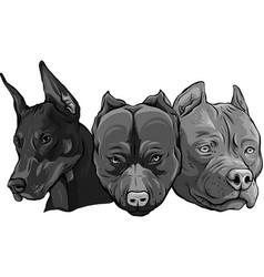 Design heads dogs pitbull dobermann bulldog vector