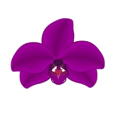 Purple orchid isolated on a white background vector image