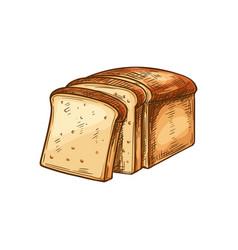 White bread sketch toast slices vector