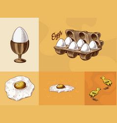 eggs and and yolk scrambled omelette shell vector image