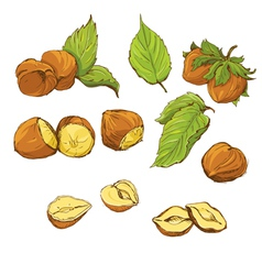 nuts handdrawn color 380 vector image