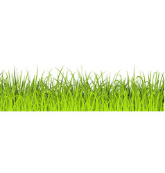spring green grass seamless green meadow border vector image
