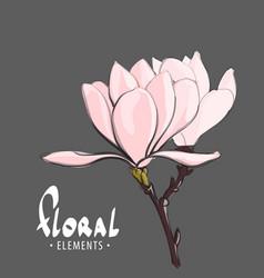 tender spring flower vector image