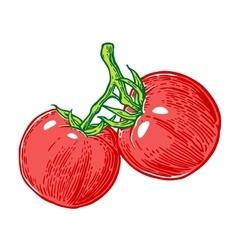 Tomato bunch engraved vector image vector image
