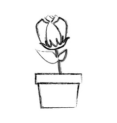 Blurred silhouette tulip flower in pot vector