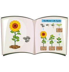 Book showing diagram of sunflower life cycle vector
