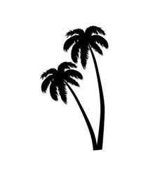 palm tree leaves silhouette vector image