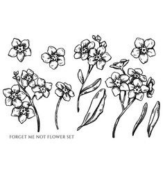 Set hand drawn black and white forget me vector