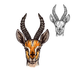 antelope sketch icon of african wild animal vector image