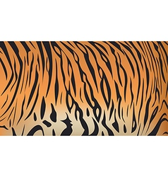 bengal tiger stripe pattern vector image