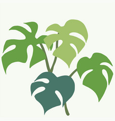 Simplicity monstera plant freehand drawing flat vector
