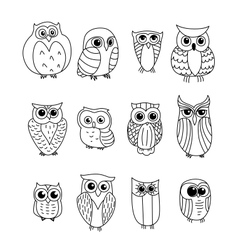 Cartoon owls and owlets vector image