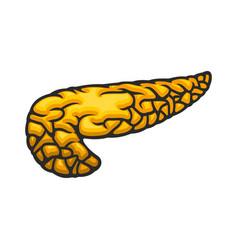 Pancreas icon human internal organ vector