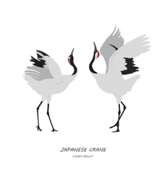 Two Japanese Cranes dancing on a white background vector image vector image