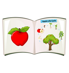 Book apple life cycle vector