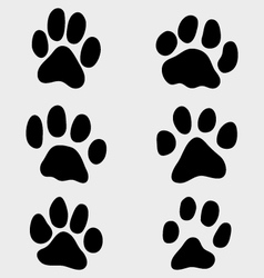 paw cats vector image