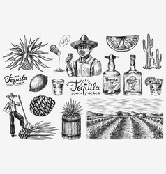 tequila bottle shot with lime blue agave plant vector image