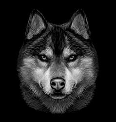 Black and white graphic portrait siberian husk vector