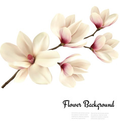 Flower background with blossom branch white vector