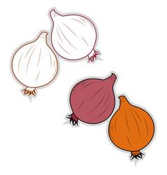 fresh onion on white background vector image
