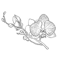 branch of orchid vector image vector image