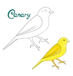 Educational game coloring book canary bird vector