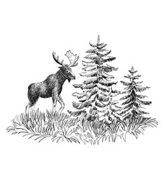 moose in wild nature vector image