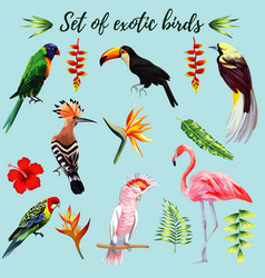 set exotic birds vector image