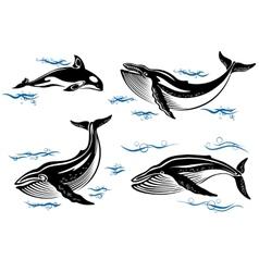 Cartoon sea whales vector image