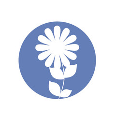 daisy flower natural icon vector image