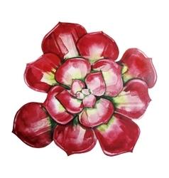 Watercolor cute succulent vector