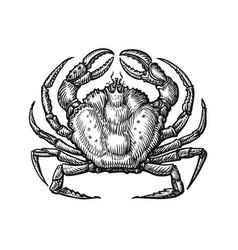 crab with claws sketch in vintage vector image