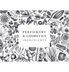 hand drawn perfumery and cosmetics ingredients vector image