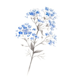 Watercolor branch of blue forget-me-flower vector image vector image
