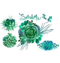 Watercolor green succulent vector image vector image
