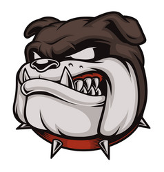 head of angry bulldog vector image