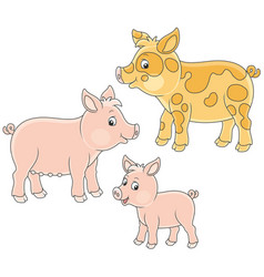 Small pink piglet pig and hog vector