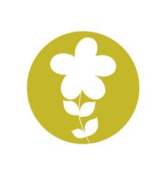 plumeria flower natural icon vector image