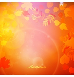Autumn Colorful red and yellow leaves vector image