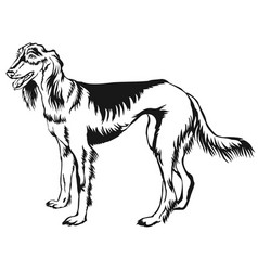 Decorative standing portrait of persian greyhound vector