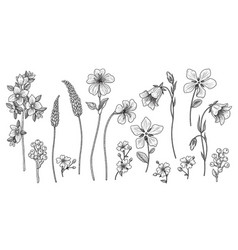Hand drawn monochrome wild flowers set vector