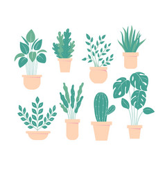 houseplant in pot flowerpot set home plant vector image