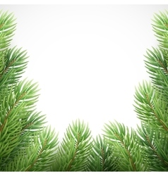 Green spruce branches like Christmas frame vector image