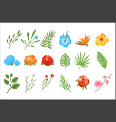 Flat set of tropical plants exotic flowers vector