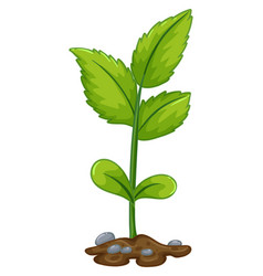 Green plant growing from underground vector