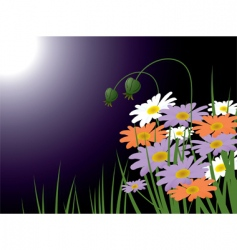 chamomiles meadow vector image vector image