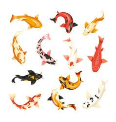 carp fish icons top view vector image
