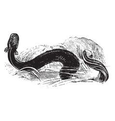 Electric eel vintage vector
