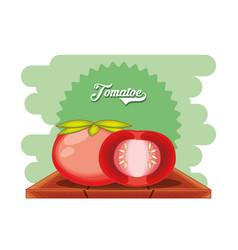 fresh tomato healthy food vector image