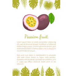 passionfruit with leaf exotic juicy fruit poster vector image